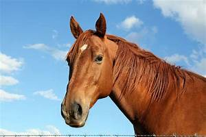 6 Injuries Commonly Found in Horses | Pets4Homes