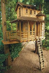 36, Amazing, Dream, Tree, Houses