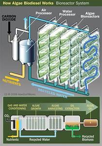 Growing Algae for Biodiesel Use - Growing Algae for ...