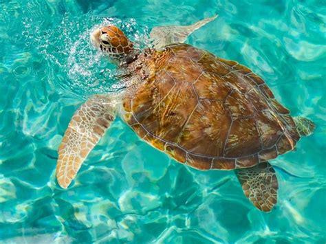 duiken en snorkelen  mooiste plekken om te duiken