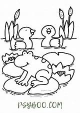 Frog Pond Duck Coloring sketch template