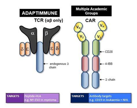 Unum's Antibody-directed T Cells