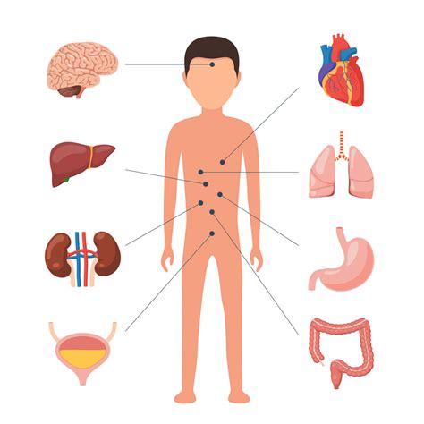Medicina Interna Definici 243 N De Medicina Interna Qu 233 Es Y Concepto