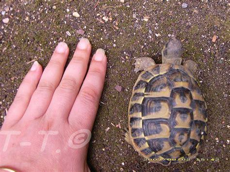 que mange une tortue de terre