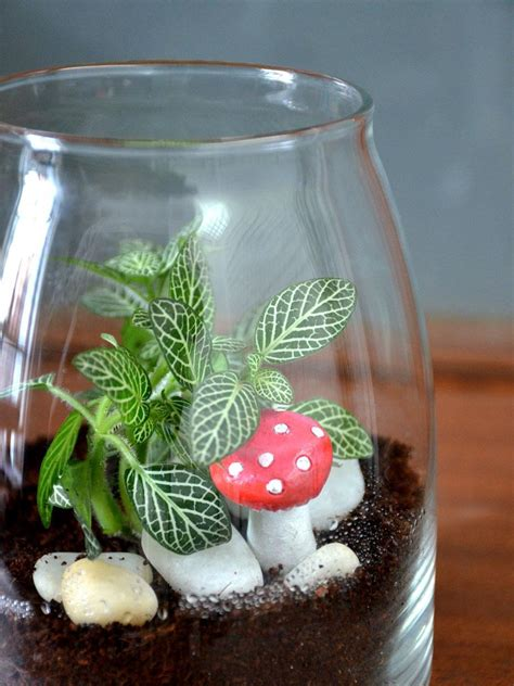 jar terrarium jar terrarium only for bangalore delivery greenmylife anyone can garden