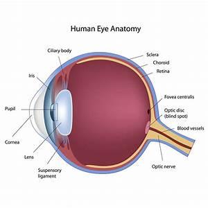 Laser Eye Treatment  U0026 Cataract Surgery