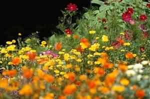 Blumen Im Juli : garten im juli tipps und arbeiten ~ Lizthompson.info Haus und Dekorationen