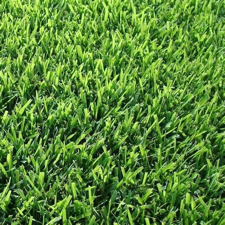 what type of grass is sod hawaii live plants el toro zoysia grass walmart com