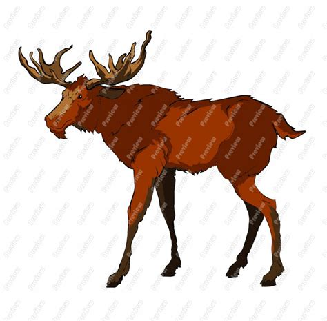 Moose Clip Moose Clipart Realistic Pencil And In Color Moose