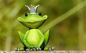 Frosch Bilder Lustig : lustige tiere bilder pixabay kostenlose bilder herunterladen ~ Whattoseeinmadrid.com Haus und Dekorationen