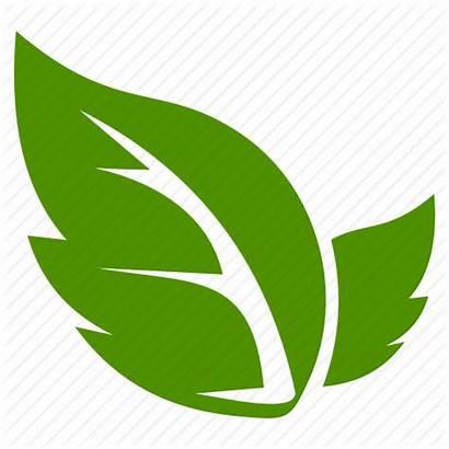 Dhanwantari Leaf Icon Leave Liquid Nutritionals Pvt