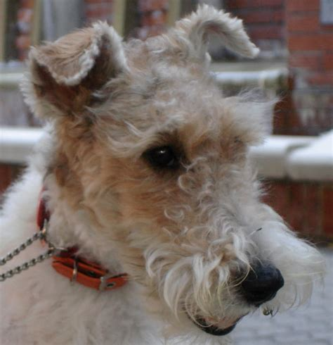 All List Of Different Dogs Breeds Good Family Dogs