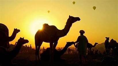 Camel Pushkar Fair Peapix