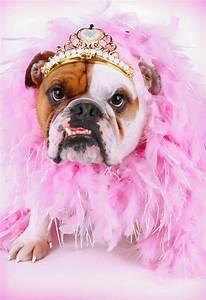 fancy bulldog in a tiara thinking of you card