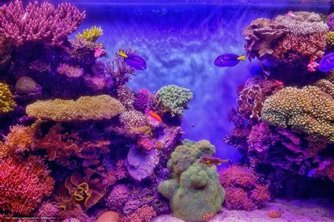 aquarium bureau tlcharger fond d 39 ecran aquarium aquarium mer poisson