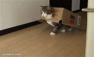 Cat Walk GIF - Find & Share on GIPHY