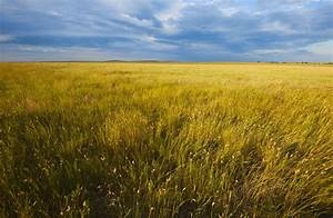 Tundra Tundra Is Found In The Northernmost And Southernmo
