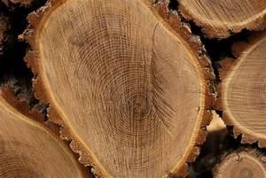 Massivhaus Preise Pro Qm : robinienholz diese preise finden sie auf dem markt ~ Sanjose-hotels-ca.com Haus und Dekorationen