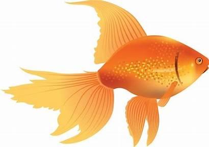 Goldfish Vector Clipart Clip Icon Yellow Swimming