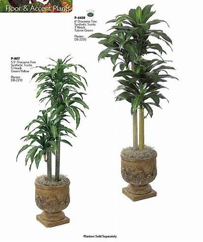 Plants Tropical Names Indoor Common Tall Houseplants