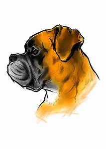 Boxer Dog Head Drawing | www.imgkid.com - The Image Kid ...