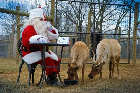 farm christmas tree pennsylvania pa reindeer arch farms barn easton road season onlyinyourstate magical