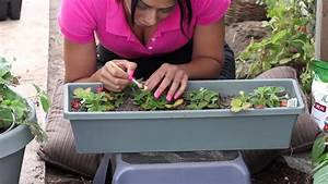 How To Pollinate Strawberries   The Chef U0026 39 S Garden