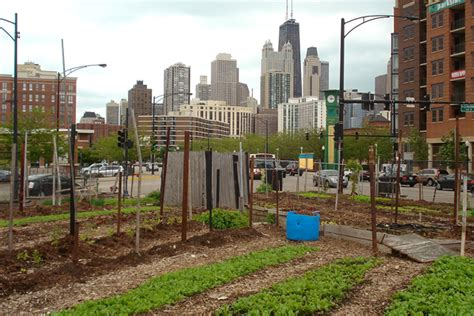 Chicago's Urban Farm District Could Be The Biggest In The