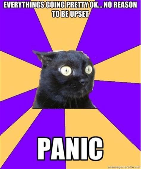 Anxiety Cat Meme - panic memes image memes at relatably com