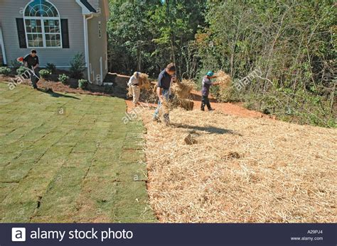 seeding a lawn seeding and mulching new home lawn construction for sale by latin stock photo royalty free