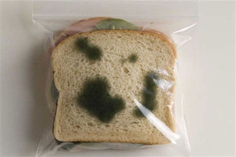 growing mold  bread experiment science project ideas