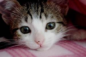 most beautiful cat in the world | Flickr - Photo Sharing!