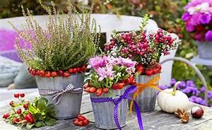 Herbstblumen Garten Winterhart : fleurir mon balcon ~ Frokenaadalensverden.com Haus und Dekorationen