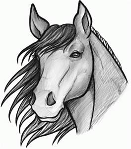 How to Sketch a Horse, Step by Step, Sketch, Drawing ...