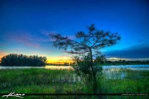 Okeeheelee, Park, Small, Cypress, Tree, At, Lake