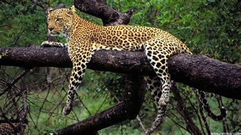 High Definition Animal Wallpapers - animals pictures high definition wallpapers high