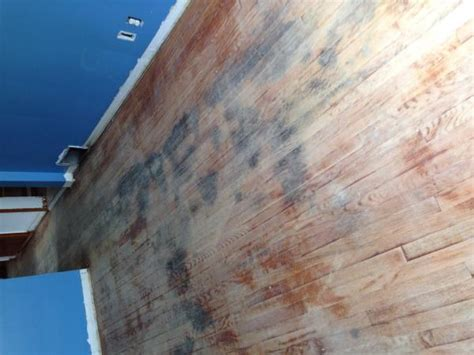 Urine Soaked Hardwood rip up or Kilz to cover with