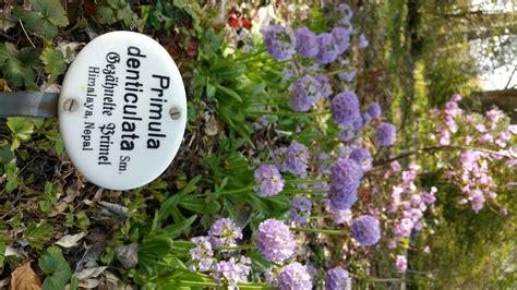Botanischer Garten Riedberg by Auf Pflanzenjagd In Den Botanischen G 228 Rten Frankfurts