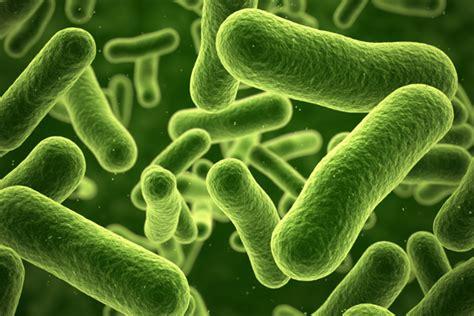 E.coli Found In Spring Water