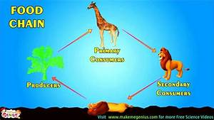 Food Chains   Food Webs   Energy Pyramid