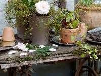 Best Primitive Flowers Gardens Images Pinterest