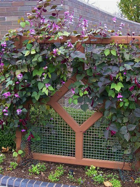 fast growing vines for pergola use fast growing plants to solve landscaping problems hgtv
