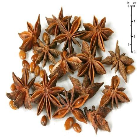 jual benih biji bunga lawang star anise lapak agrobenih