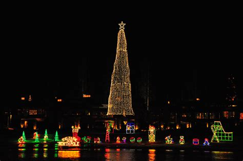 tallest xmas teee in tge workf world s tallest living tree explored flickr photo