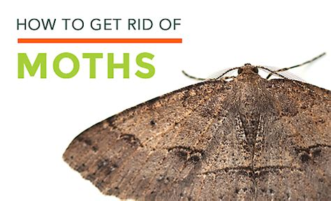 How To Get Rid Of Moths In Closet Naturally by Clothes Moths Facts How To Get Rid Of Moths