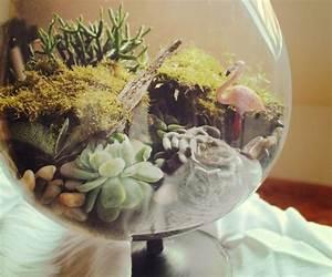 Sukkulenten Im Glas Pflanzen : mini garten im glas diy mini garten garten und pflanzen ~ Eleganceandgraceweddings.com Haus und Dekorationen
