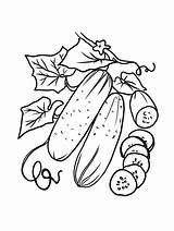 Cucumber Coloring Bitter Vegetable Fruit Eggplant Gaddynippercrayons Cucumbers Included Annual Short Tomatoes Lived Crops Pumpkin Such Printable Melon Christmas Template sketch template