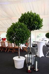 Pflanzen Für Raucher : pflanzen f r events auf leihbasis ~ Markanthonyermac.com Haus und Dekorationen