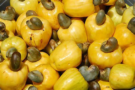 Belize Celebrates the Noble Cashew