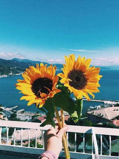 Aesthetic Bright Vsco Wallpapers Sunflower Sunflowers Yellow